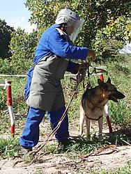 schäferhund auf einem Minenfeld